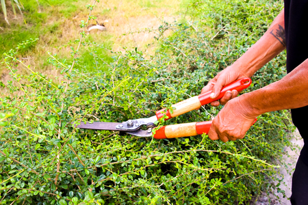 Mowing cutting green grass in background, Stock Photo