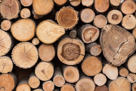 wood cut: Seamless wood texture of cut tree trunk
