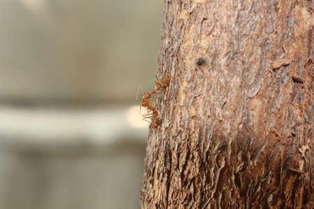 Greetings of ants