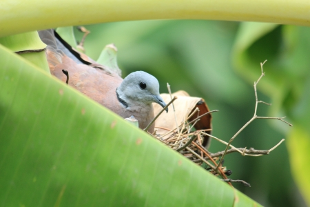 Birds are hatching Stock Photo