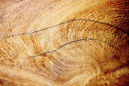 Life cycle of Tree  Reklamní fotografie
