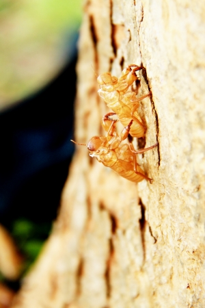 Treatment of cicada Фото со стока