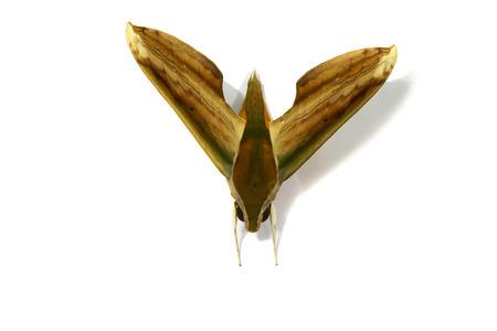 Moth Stock Photo - 23198945