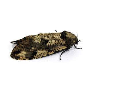 Moth Stock Photo - 23198947