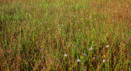 Meadow in Thailand photo