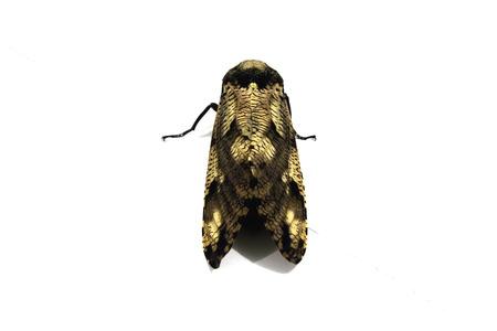 Moth Stock Photo - 23695047