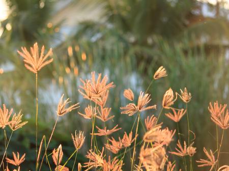 Flower of grass photo