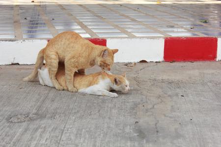 Happy Cat  having sex