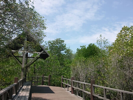 passages: Passages in the mangrove forest