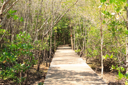 Passages in the mangrove forest