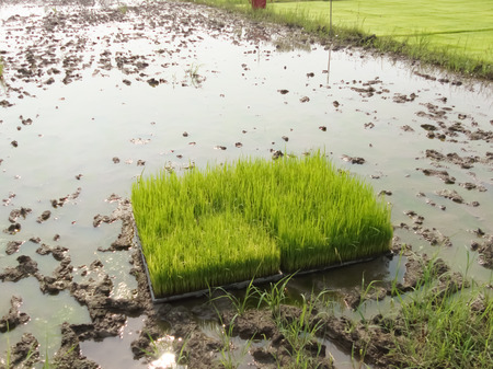 Green crops in the agricultural demonstration