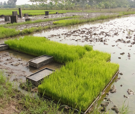farme: Green crops in the agricultural demonstration