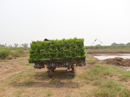 Vehicles carrying rice seedlings photo