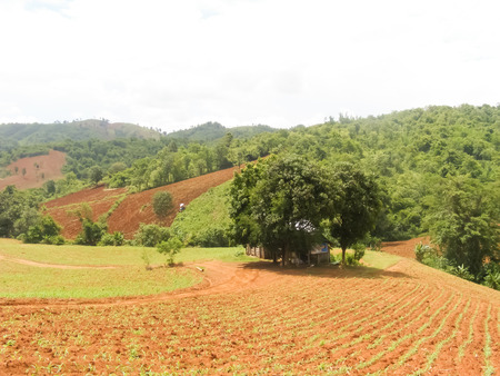 conventional: Conventional farming on the mountain
