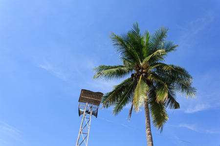 Broadcast tower with coconut trees and blue sky