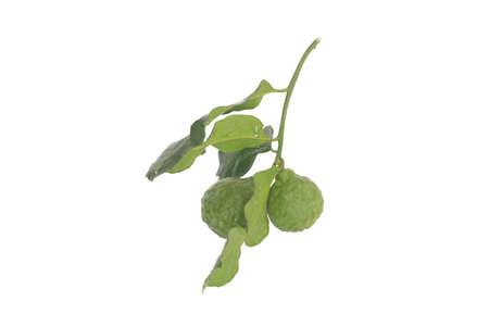 Bergamot herb for cooking photo