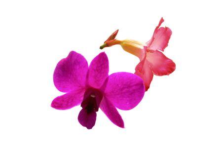 Orchideeën en kleurrijke azaleabloemen