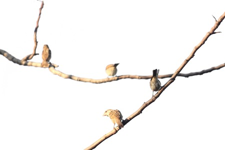 Birds perch on tree branches Stok Fotoğraf - 29776408