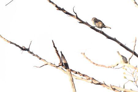 Birds perch on tree branches Stok Fotoğraf - 29776410