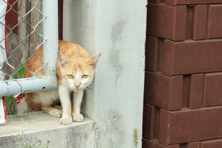 Cat stuck in a wall niches Stock Photo