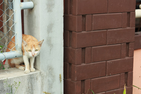 niches: Cat stuck in a wall niches Stock Photo