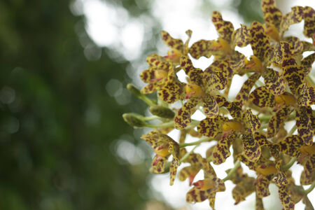 Yellow orchid photo