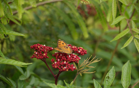 Yellow butterfly perched on a flower photo