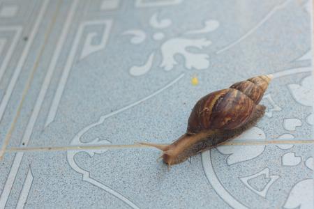 Snail on the tiles photo