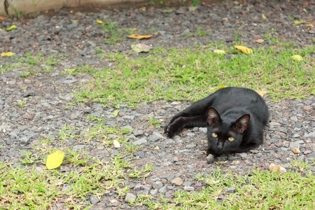 Black cat lying on the ground. photo