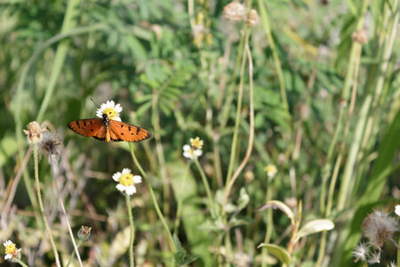butterfly perched on a flower photo