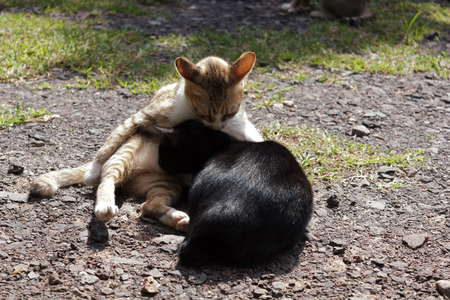 Two cats lying on the ground. photo
