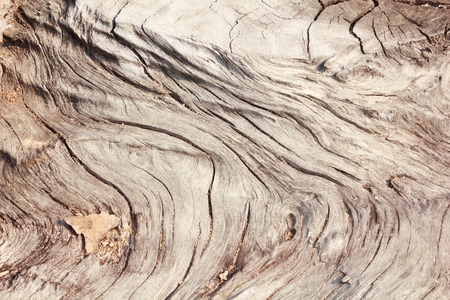 Pattern of wood decay photo