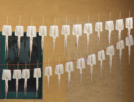 drying: Squid drying on clothesline