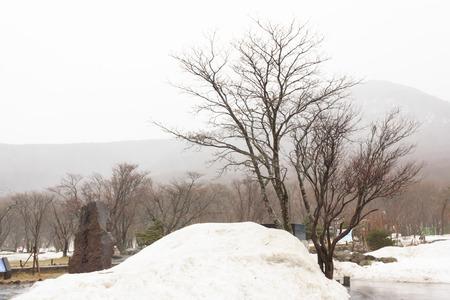 Winter snow Jeju Island  South Korea Stok Fotoğraf