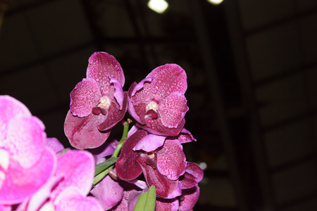 pink orchid: Pink orchid flowers