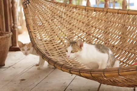 cradle: Cat on a Cradle
