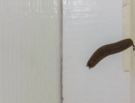 Slugs on the wall of the house