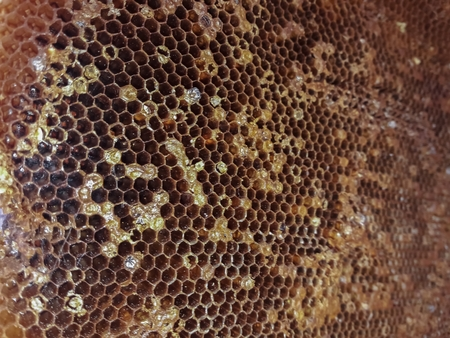 honey bees nest