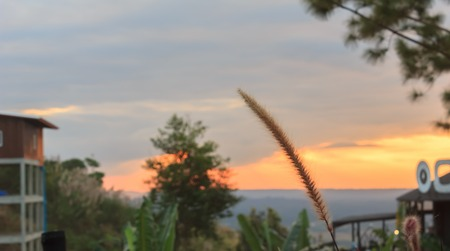 Grass flower with sunset behind the mountain.