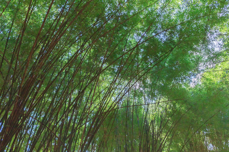 Bamboo and green bamboo leaves. Stock Photo