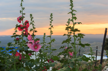Beautiful flowers and sunset behind mountain.