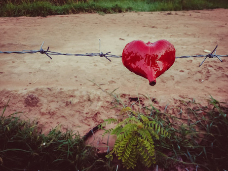 Red heart on barbed wire. Фото со стока