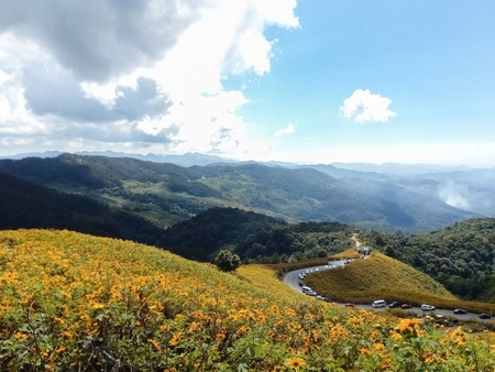 Beautiful mexican sunflower on the mountains in Thailand Stok Fotoğraf - 119599711