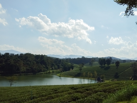 Tea plantations and swamps
