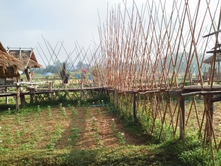 The bridge is made of bamboo.