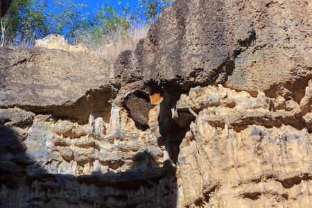 Bee nesting on the cliff Banque d'images