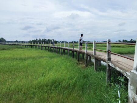 Concrete bridge on the rice field Stok Fotoğraf - 128046778