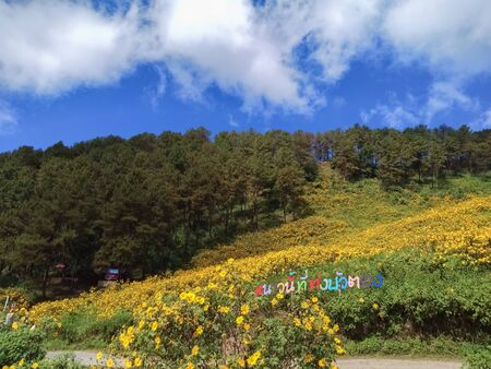 Beautiful mexican sunflower on the mountains in Thailand Stok Fotoğraf - 128046186