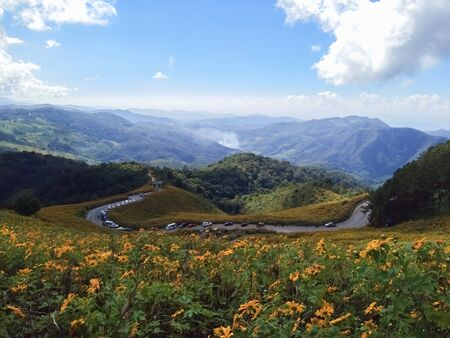 Beautiful mexican sunflower on the mountains in Thailand Stok Fotoğraf - 128046132