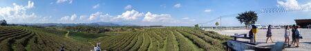 Beautiful tea plantation on the mountain Stok Fotoğraf - 128046037